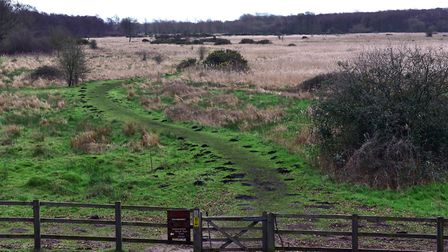 Redgrave and Lopham Fen. Picture: SONYA DUNCAN