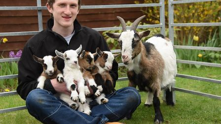 Rees Eagle with his rare set of pygmy goat quadruplets and their mum Holly, at his family's home in