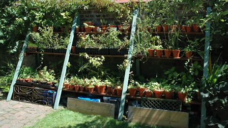 It doesn't matter the size of your garden or if you are a keen gardener. Picture: Age UK Norfolk