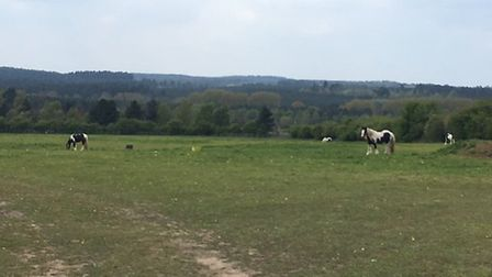 The field where horses are being kept off the Mundford Road A1066 in Thetford. Picture: Submitted