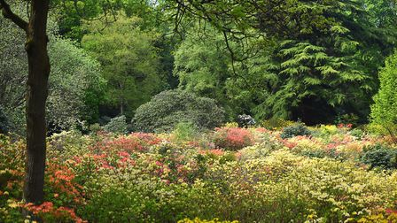 A sea of colour on display in The Water Gardens at Stody Lodge. Picture: Ian Burt