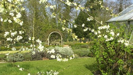 Cherry Blossom out in the Spring sunshine in the garden of the Old House at Ranworth. <Picture: Ja