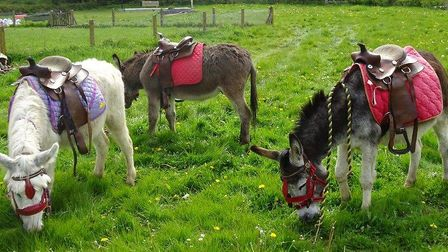 Donkeys from Scratby Donkey Sanctuary were one of the main attractions at the spring fair in Mulbart