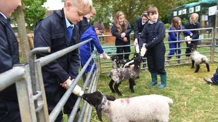 Ashleigh Primary School has its own farm on the school grounds, which includes orphaned lambs loaned