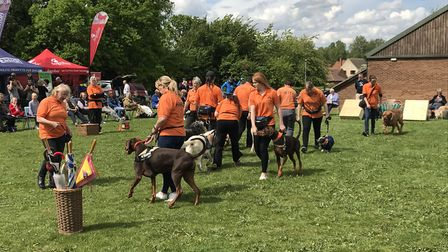 The K9 Capers performing at the fun dog show in Loddon. Picture: Amy Smith.
