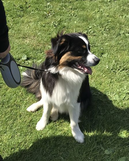 The fun dog show in Loddon. Picture: Amy Smith