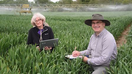 Dr Simon Griffiths and Dr Clare Lister at the John Innes Centre's trials site at Bawburgh, where a s