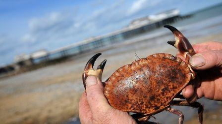 Businesses in the region prepare for World's Best Crab Sandwich competition. PHOTO: ANTONY KELLY