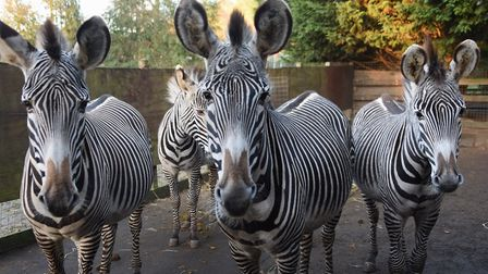 Or how about zebra..? Picture: Denise Bradley