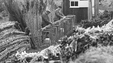 Mr B. Copeman and Mr. C. Starr making bundles of brushwood, one of the preliminary tasks in the prod