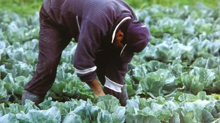 A migrant worker. Picture: Archant Library