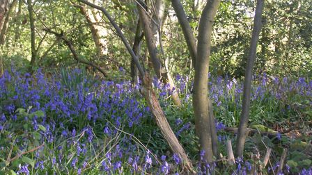 The beautiful East Hills Wood in the Tud Valley. Picture: Courtesy of Friends of the Tud Valley