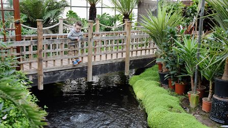Three-year-old Henry Knights looks for the fish in the pond at the Urban Jungle garden centre popula