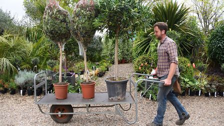 Nursery assistant, Mark Curtis, sorting a tree delivery at the Urban Jungle garden centre, at Old Co