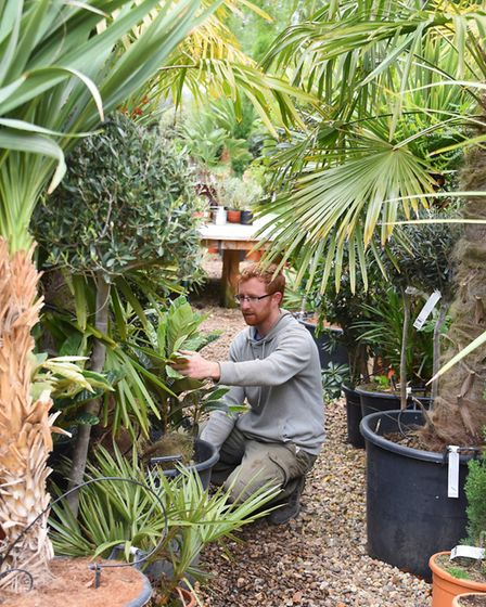 Jamie Spooner, operations manager, at work at the Urban Jungle garden centre, at Old Costessey. Pict