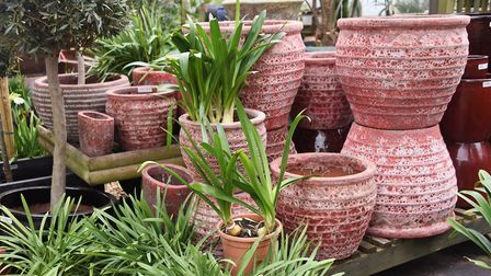 Pots at the Urban Jungle garden centre, at Old Costessey. Picture: DENISE BRADLEY