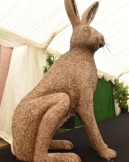 The latest GoGoHare ahead of it being unveiled at the Royal Norfolk Show Ball.Picture: Nick Butche
