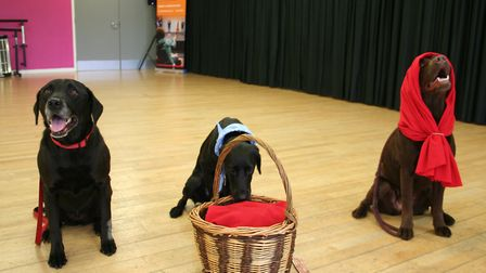 Four-legged friends Poppy, Ava and Sookie starred in Dogs First Panto: Little Red Riding Hood at The
