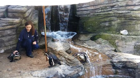 The parasol is providing solace for the pengiuns. Picture: Great Yarmouth Sea Life Centre
