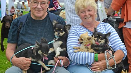 Strut Your Mutt 2017 event. Barbara and Richard Carr with their long coated Chihuahuas. Pictures: Mi