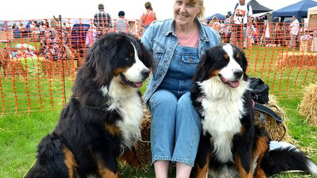 Strut Your Mutt 2017 event. Sue Moore with her Bernese Mountain Dogs. Pictures: Mick Howes