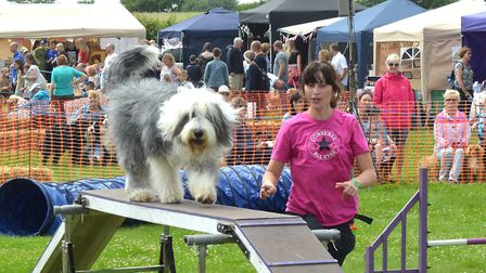 Strut Your Mutt 2017 event. Agility display from Paws of Parham. Pictures: Mick Howes