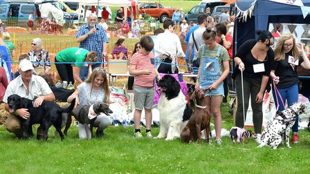 Strut Your Mutt 2017 event. Pictures: Mick Howes