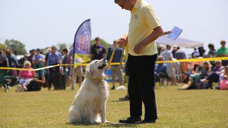 Dogs Trust Snetterton will hold a fun day on Sunday, June 4. Picture: DOGS TRUST SNETTERTON