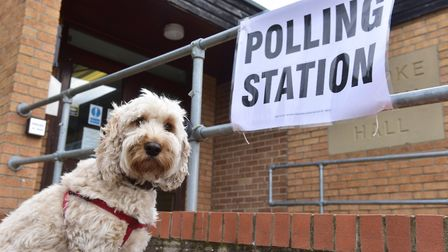 Evie the dog waits outside the Brooke village polling station. Photo: Nick Butcher