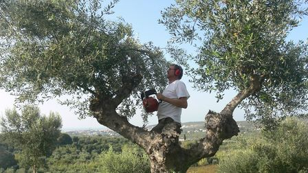 Jerry Cox of The Oil Tree, working on the olive trees at his farm in Greece. Picture: The Oil Tree
