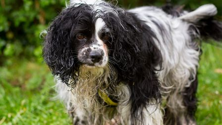 Chance arrived at the Dogs Trust Snetterton rehoming centre with his brother Lucky. Here he is befor