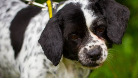 That's better. Chance after his pamper session. Picture: Dogs Trust