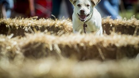 Scenes from Stradsett Country Fair at Stradsett Hall. Picture: Matthew Usher.