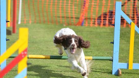A dog show is one of the events at the Stradsett Country and Craft Show, at Stradsett Hall, near Kin