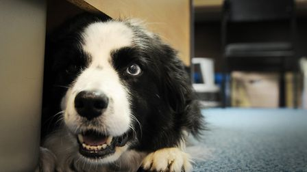 CAPTION; Photos of Bring you Dog to Work at the World Horse Welfare (ILPH) in Snetterton. Pic shows