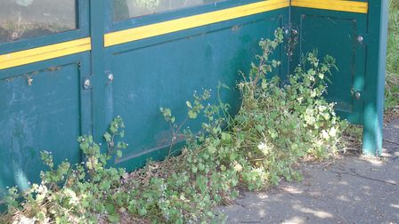The sorry state of a bus shelter in the Steeple Tower area of Hethersett. picture: Peter Steward
