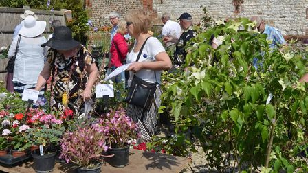 Potential customers browse amongst a mass of colourful plants. Picture: Peter Bird