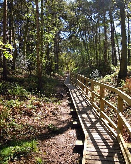 Pretty Corner Woods by Sheringham. Picture: NNDC