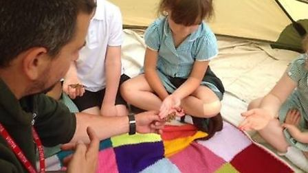 Children at Toftwood Infant School learned about butterflies. Picture: Kirsty Ponder