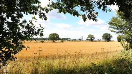 Scenic view through the verge across the Norfolk countryside. Picture: James Bass