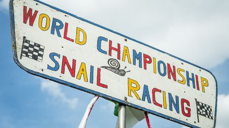 Action from the 2015 World Championship Snail Racing at Congham. Picture: Matthew Usher.