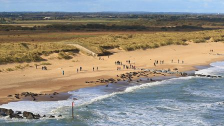 Overhead picture of seals and peope on Horsey beach. Picture: Mike Page