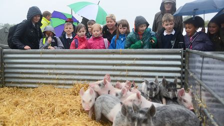 St Williams Primary School pupils in the Discovery Zone the Royal Norfolk Show. Picture: Ian Burt