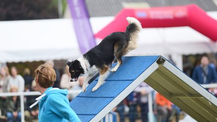 Dog Agility action from the second day of the Royal Norfolk Show. Picture: Ian Burt