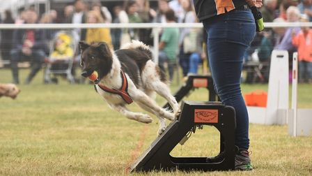 Fly balling action from the second day of the Royal Norfolk Show. Picture: Ian Burt