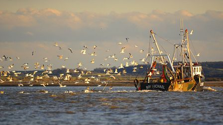 Seagulls follow a trawler at Wells. Near to the Lifeboat Station. Nikon D2X. 70-200mm. 1/1000th. f2.