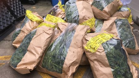 Bags of cannabis seized by police in Great Yarmouth. Picture: David Hannant