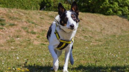 Colleen is a three-year-old collie cross who has been at Dogs trust Snetterton's rehoming centre for
