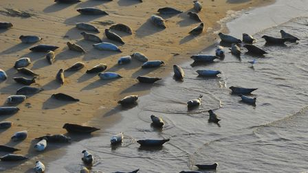 Late afternoon light brings highlights some of Norfolk's sites seen from the air. Seals on Scroby sa