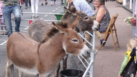 Bungay Antiques Street Fair. Two donkeys at the fair attracted a lot of interest. Pictures: Terry Re